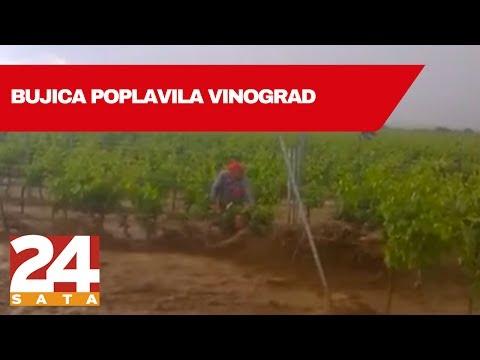 Bujica poplavila vinograd: Pola sata se radnici držali za loze