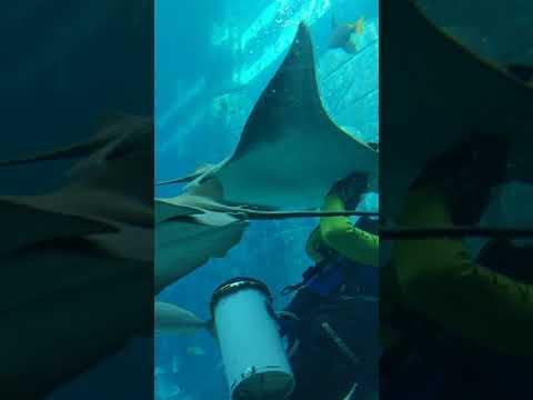 Lost Chambers – Dubai Aquarium