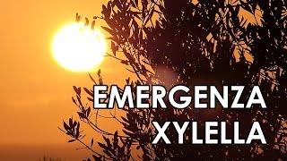 Emergenza Xylella: voce alla scienza