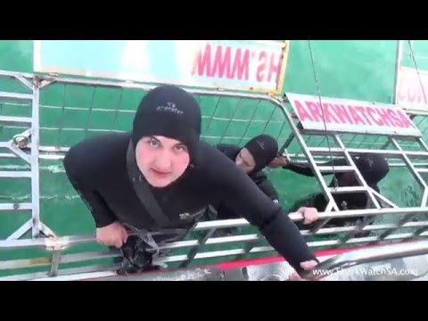 Shark Dive with Marine Dynamics South Africa 3-31-16