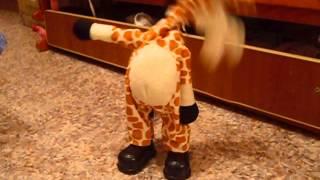 Танцующий жираф-Мадагаскар