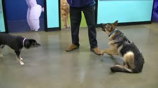 Dog Training Session at Petsmart