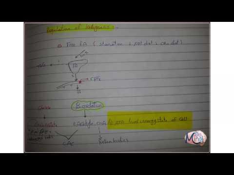 7- Regulation Of Ketogensis & Diabetic Keto Acidosis