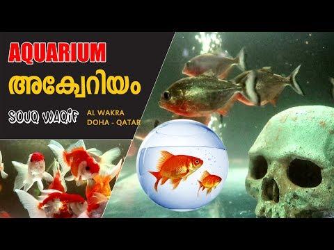 Aquarium Al Wakra Souq Waqif - Doha Qatar