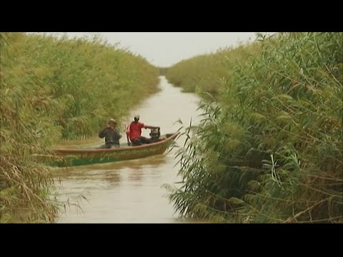From ecological disaster to small miracle in Mauritania