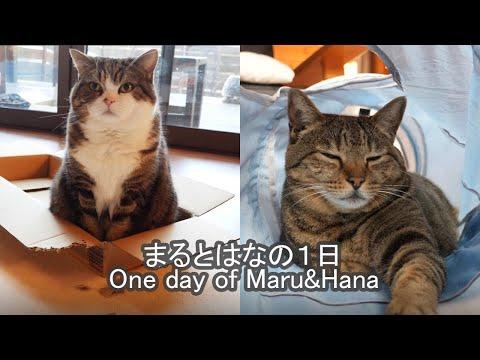 -One day of Maru&Hana.-