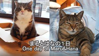 まるとはなのとある日。One day of Maru&Hana.