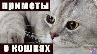 Народные приметы о кошках