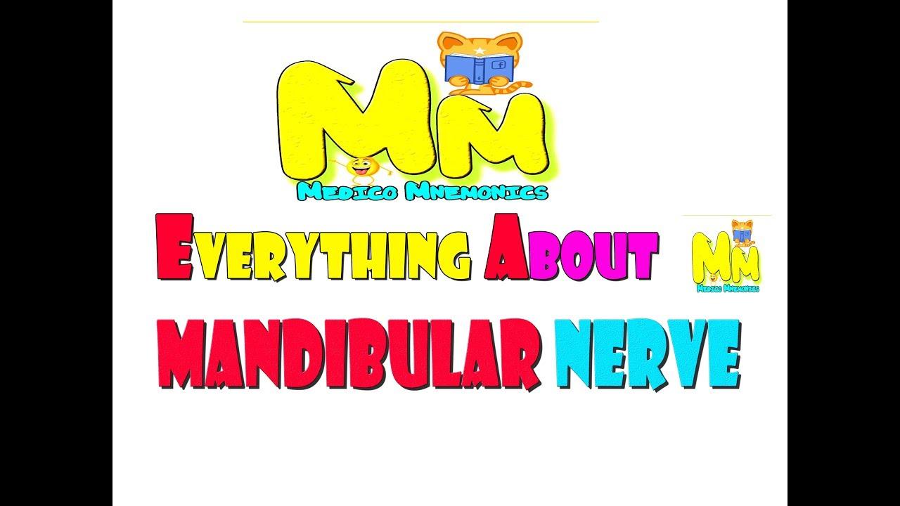 Remember Everything About Mandibular Nerve, Mnemonic for USMLE step ...