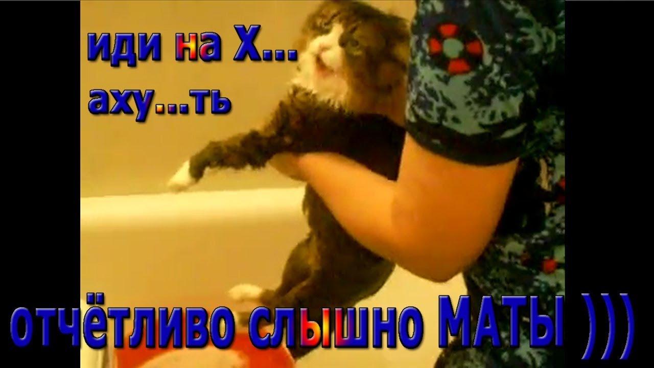 Кот матерится,четко говорит иди на х..