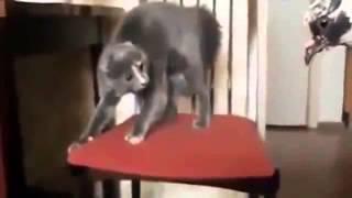 Прикол! Подборка смешных видео с котами! Угар! Всем смотреть