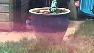 shooting test draganov bb gun svd