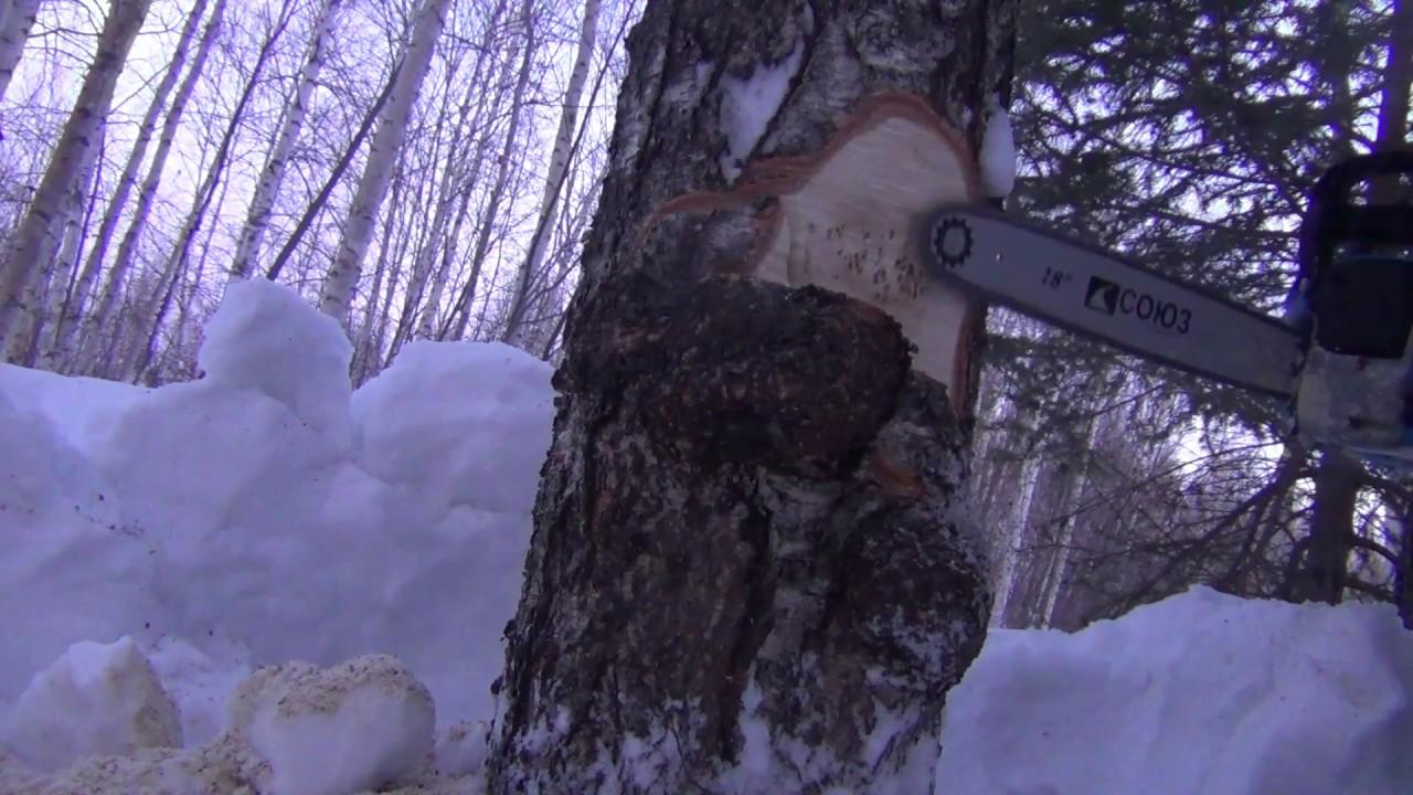 Шпон корень (кап) дуб производят из каповых наростов или корней деревьев, которые растут на западе и юго-западе европы. Росту капов содействуют.