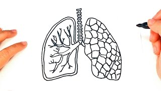 How to draw a Lungs | pair of Lungs Easy Draw Tutorial