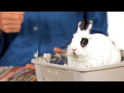 How to Determine a Rabbit's Age | Pet Rabbits