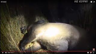 Охота на кабана и охота на косулю в Белоруссии