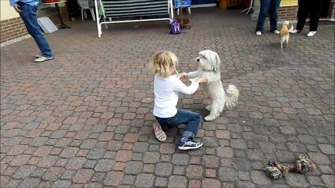 gratis futterproben hund