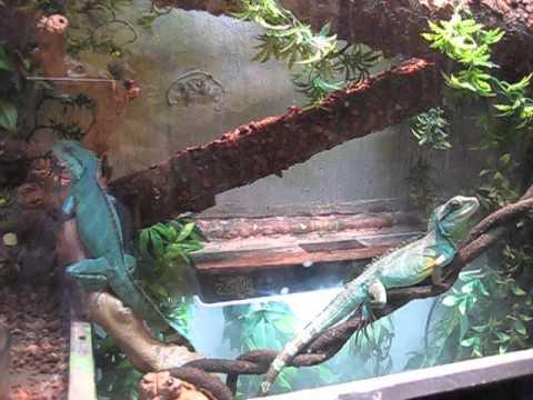 Upgraded Terrarium Vivarium Aquarium For My 2 Water Dragons Youtube