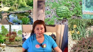 Мой сад в Америке. Видео блог № 24