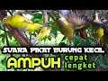 Suara Pikat Burung Kecil Ampuh Cepat Dapat  Mp3 - Mp4 Download