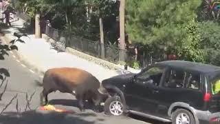 Дикие животные атакуют людей. Жесть