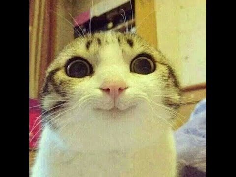 Кошки и коты - Ржачные видео приколы