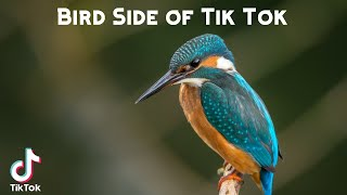 Bird Side of Tik Tok