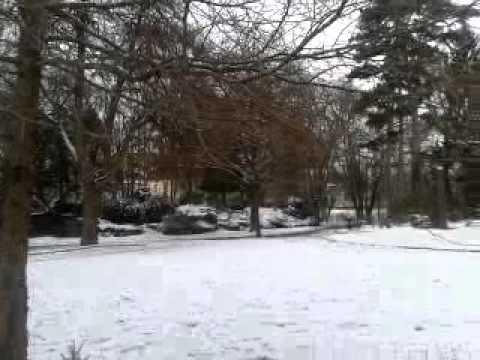 Jardin Anglais De Vesoul En Hiver Youtube