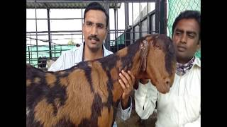 Mr.Sagar Shinde Goat Farming Success Story | Oxygoat Farm Satara.