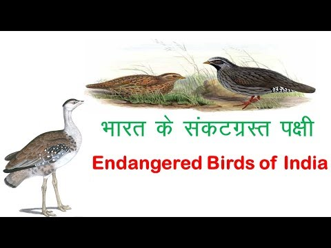 Endangered Species Of India Part - III   Endangered Birds   Ecology