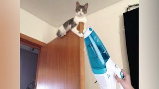 Animal's BEST or the VERY WORST FRIEND: VACUUM CLEANER! - The FUNNIEST PET REACTIONS