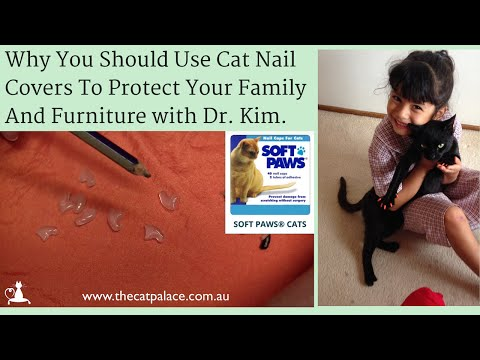 Why Use Cat Nail Covers To Protect Your Furniture