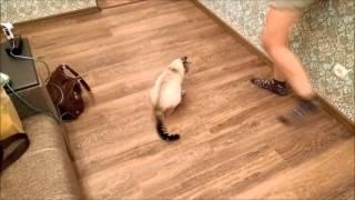 Автоматический лазер для кота