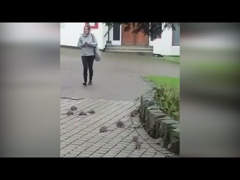 30 RATS Shock Woman on the Street in the Center of Plymouth