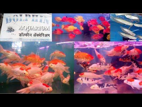 Dolphin Aquarium Kurla Fish Market Wholesale Fish Price