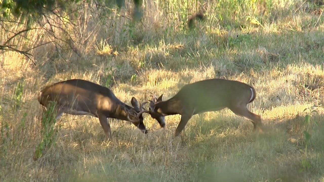 Kentucky Department of Fish & Wildlife Deer Hunting Regulations