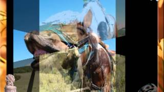 Конные прогулки в Крыму. Конно-прогулочный клуб