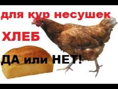 Что Влияет на Яйценоскость Кур?Можно ли Давать Курам Хлеб?/Сколько и Какой Хлеб Давать Курам!