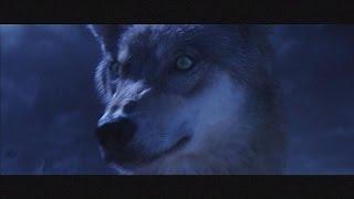 L'ultimo lupo - cinema