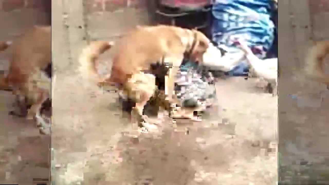 Perros follando mujeres