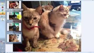 猫ピタ公式サイトhttp://www.esrs2010.com/からご購入の場合、30日間全...
