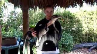 Укрощение аллигатора. На Аллигаторской Ферме в Майами, Флорида.США.(На Аллигаторской ферме в Майами можно проехаться на катере на воздушной подушке по территории фермы в неск..., 2014-04-20T16:15:41.000Z)