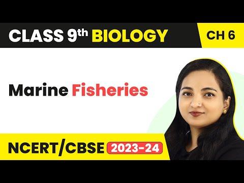Fish Production Marine Fisheries   Class 9th Biology
