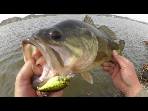 バス釣りクランクベイトのヒットシーン/2016 BassFishing