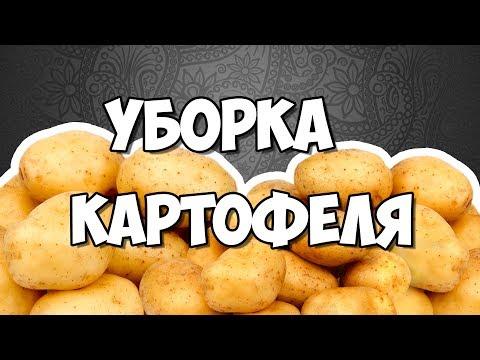 Сорта, болезни, уборка картофеля