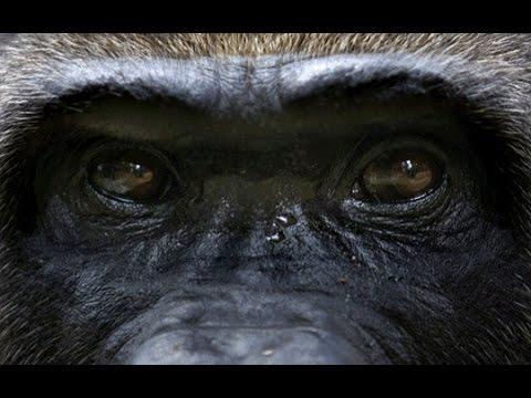 El Mono sabio (HD)