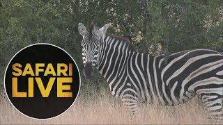safariLIVE - Sunrise Safari - July 5, 2018 thumbnail