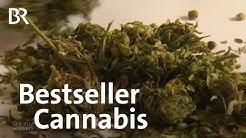 Cannabis: Wie gesund ist Cannabidiol (CBD)? | Gut zu wissen | BR