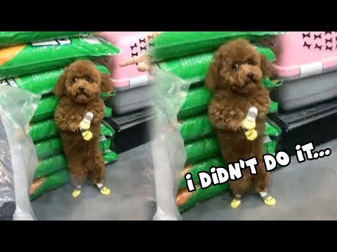 Dog Looks Incredibly Guilty After Being Told Off in Public