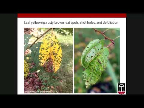 Troubleshooting Common (And Not so Common) Plant Diseases in the Georgia Landscape